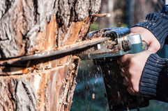 Power saw is sawing tree royalty free stock images