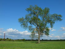 Power station chimney, meadow, tree and blue sky with nice white clouds Royalty Free Stock Image