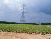 Power tower with field. On sunny day royalty free stock images