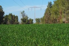 Power transmission line over meadow Royalty Free Stock Photos