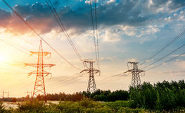 Electric transmission line in rice field during sunset. Royalty Free Stock Image
