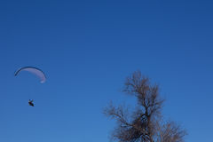 Powered paragliding with the tree. On blue sky royalty free stock image