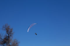 Powered paragliding with the tree. On blue sky royalty free stock images