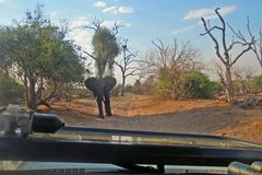 African elephant blocking the road on African Safari Stock Image