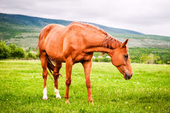 Powerful beautiful horse standing on the field Stock Photos