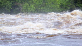 The powerful flow of the river after a tropical rain, Equator, Africa. Tropical river floods the African jungle, close-up, Equatorial Guinea. Rapid River in stock video footage
