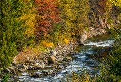 Powerful forest brook with rocky shore. Powerful mountain brook with rocky shore among colorful foliage. lovely autumnal nature background Stock Photography
