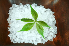 Powerful green leaf in spa Stock Image