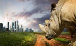 Powerful rhino at sunset. Stock Photos