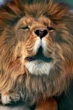 Powerful Roar Royalty Free Stock Images