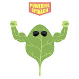 Powerful spinach. A strong plant with big muscles. Green, fresh Royalty Free Stock Photos