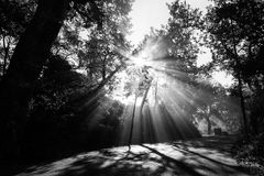 Powerful sun rays cutting through the mist on a road, in the midst of some trees in the shadows. Powerful sun rays cutting through the mist on a road in the Royalty Free Stock Photo