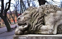 Powerfull sculpture of stone lion. In Lviv Stock Images