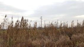Powerline achter lang droog gras Stock Fotografie