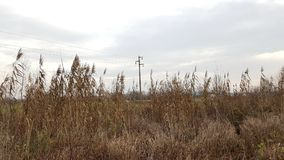 Powerline behind tall dried grass Stock Photography