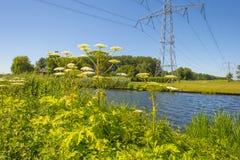 Powerline nad dajkiem wzdłuż brzeg jezioro Zdjęcia Royalty Free