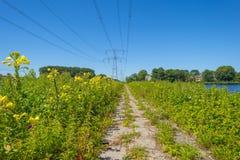 Powerline nad dajkiem wzdłuż brzeg jezioro Zdjęcie Royalty Free
