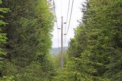 Powerline przez drzew Obrazy Royalty Free