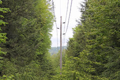 Powerline through the trees Royalty Free Stock Images