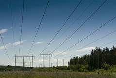 Powerline in the wood Stock Photography