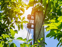 Powerline z zielonymi liśćmi Fotografia Stock