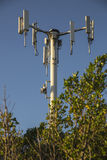 Powerlines в парке Стоковое Фото