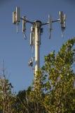 Powerlines i en parkera Arkivfoto