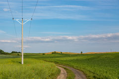 Powerlines on mature rape field Stock Images
