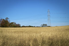 Powerlines Over Field Stock Image