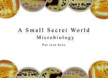 Powerpoint presentation background microbiology, petri dish and Royalty Free Stock Images