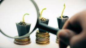 Powiększający - szklany patrzejący trzy małej zielonej rośliny r na złotych monetach, pieniądze drzewo, pieniężny biznesowy przyr zbiory