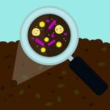 Powiększać - szklane powiększanie bakterie Zdjęcia Royalty Free