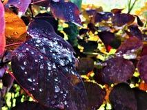 Powiększająca natura w żywych kolorach obraz stock