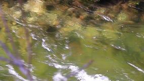 Powierzchnia bieżąca woda zbiory wideo