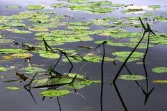 Powierzchnia jezioro Zdjęcia Royalty Free
