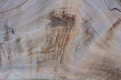 Powierzchnia wielcy drzewa które byli prywatyzacją z trac Zdjęcia Royalty Free