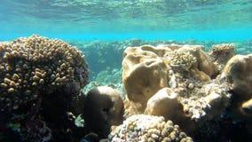 Powierzchnia woda w czerwonym morzu zdjęcie wideo