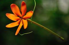 powiesić kwiatów Obrazy Stock