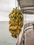 powiesić bananów Obrazy Royalty Free