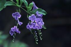 powiesić kwiatów fotografia stock