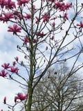 powietrze kwiaty ręce człowieka wiosny Zdjęcia Stock