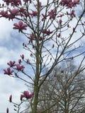 powietrze kwiaty ręce człowieka wiosny Fotografia Stock