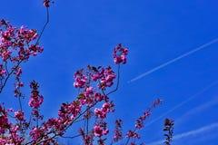 powietrze kwiaty r?ce cz?owieka wiosny zdjęcia stock