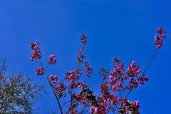 powietrze kwiaty r?ce cz?owieka wiosny obraz stock
