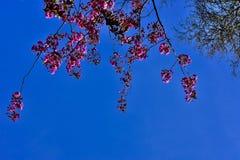 powietrze kwiaty r?ce cz?owieka wiosny fotografia stock
