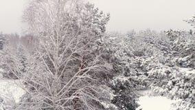 Powietrzna ankieta od powietrza Śnieżny las zbiory