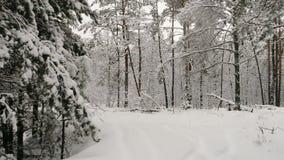 Powietrzna ankieta od powietrza Śnieżny las zbiory wideo