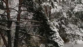 Powietrzna ankieta od powietrza Śnieżny las zdjęcie wideo
