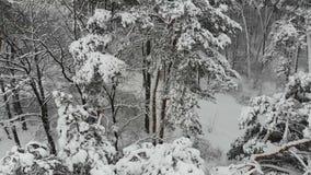 Powietrzna ankieta zima las ilustracji