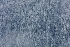 Powietrzna fotografia lodowa śnieg i dolina zakrywał lasowego las f obrazy stock